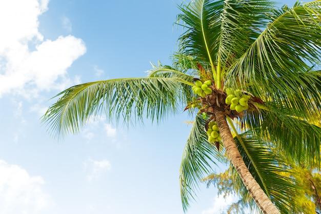 Kokosowy drzewko palmowe na niebie