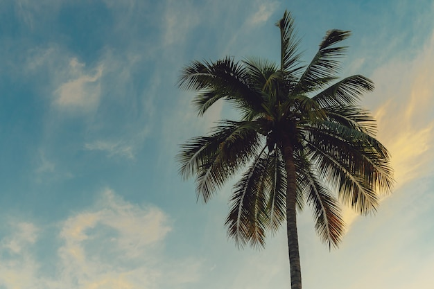 Kokosowy drzewko palmowe przy tropikalnym wybrzeżem w wyspy plaży z rocznika brzmieniem.