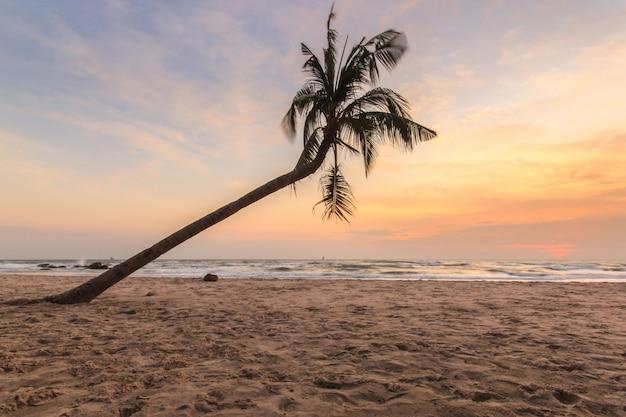 Kokosowy drzewo na huahin plaży, tajlandia