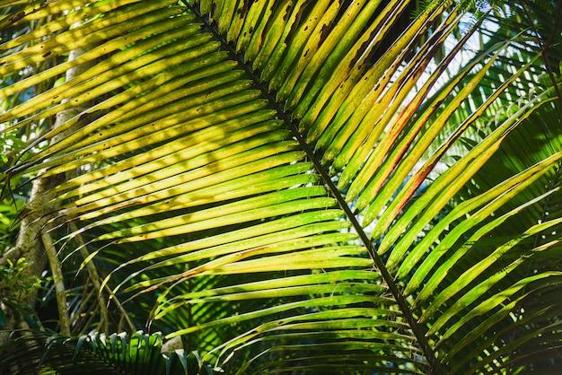 Kokosowy duży liść z błyszczącym słońcem