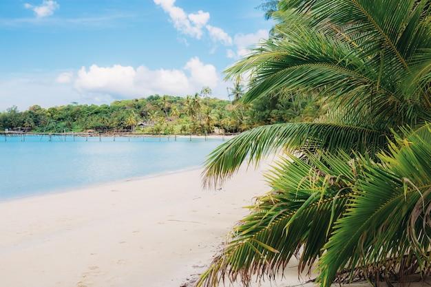 Kokosowy liść na plaży przy niebem.