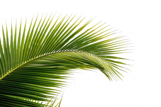Kokosowy liść palmowy odizolowywający