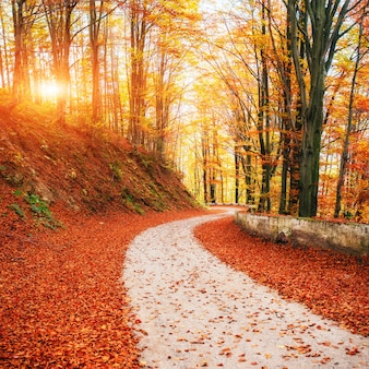 Kolaż jesienna aleja. filtr w stylu retro. karpaty ukraina europa