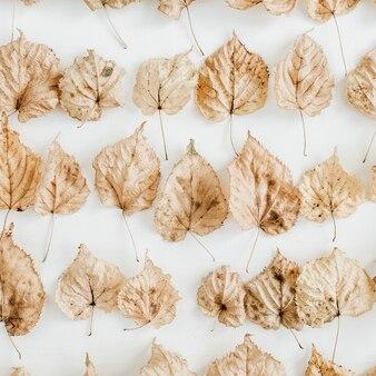 Kolaż suchych jesiennych liści jesienią na białej powierzchni. widok z góry na płasko