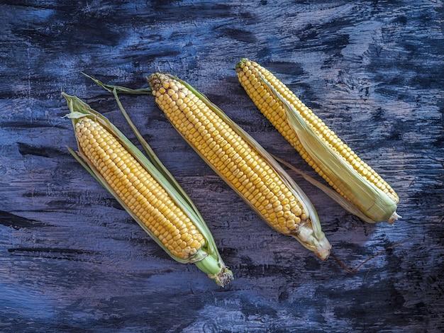 Kolby surowej kukurydzy z nowych zbiorów na ciemnym tle widok z góry