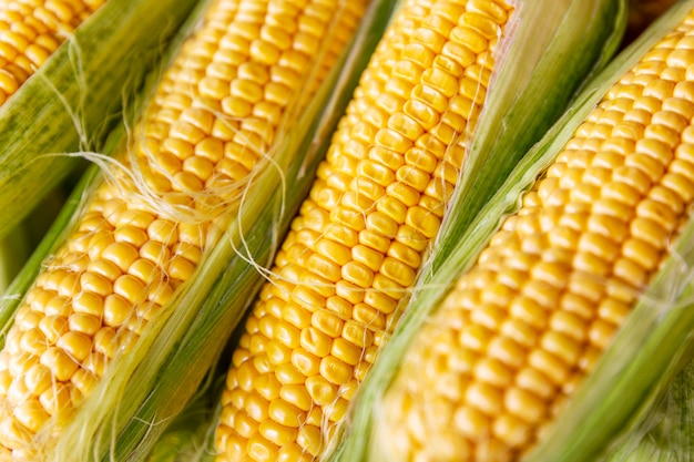 Kolby świeżej złotej kukurydzy.