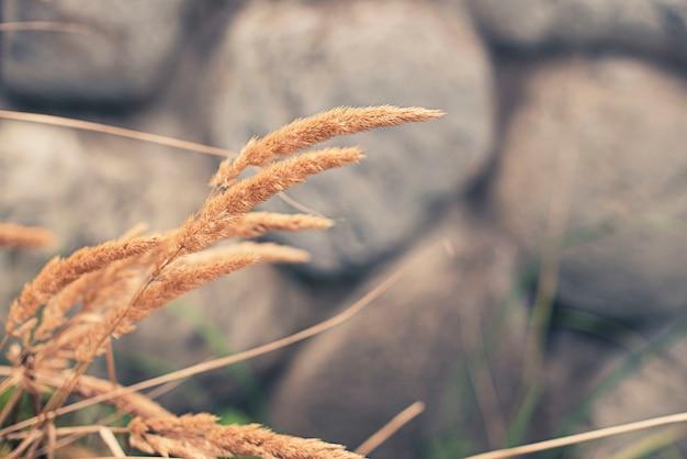 Kolec i zielona trawa na zamazanego tła starej kamiennej ścianie.