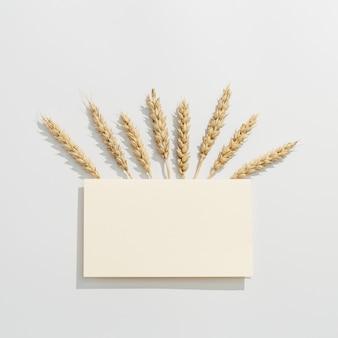 Kolec pszenicy z bliska. uprawy zbóż. bogata koncepcja kreatywnych zbiorów.