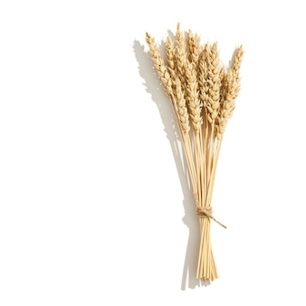 Kolec pszenicy z bliska z cieniami na białym tle uprawa zbóż obraz martwej natury z naturalnymi uszami