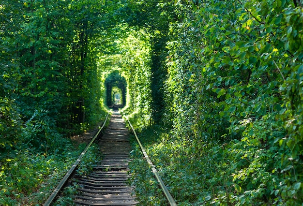Kolej przez las. tunele miłości.