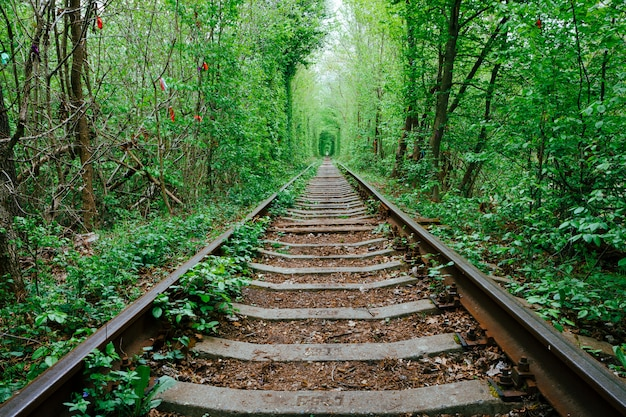 Kolej w wiosennym lesie. tunel miłości, zielone drzewa i tory kolejowe