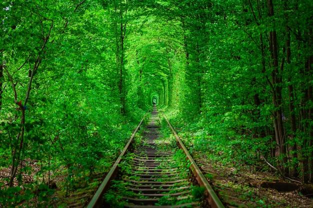 Kolej w wiosennym leśnym tunelu miłości