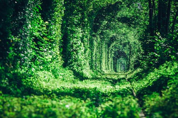 Kolej w wiosennym tunelu leśnym miłości