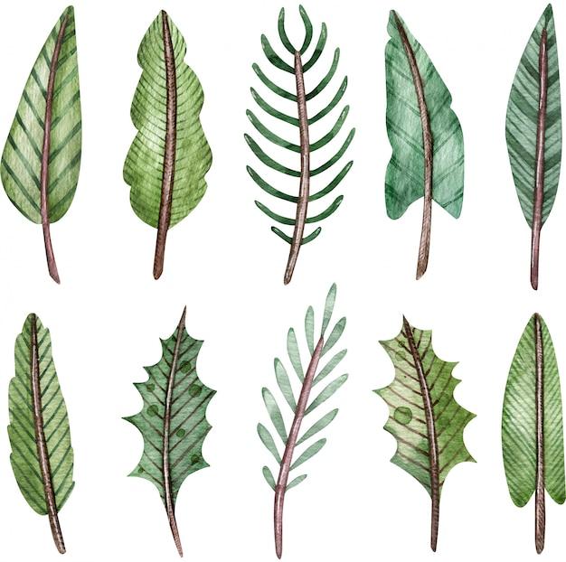 Kolekcja akwarela zielonych gałęzi drzew. gałązki jodły i świerku. clipartów świątecznych dekoracji.