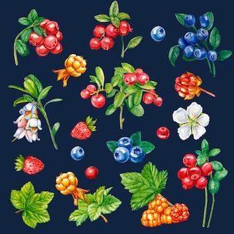 Kolekcja dzikie jagody na ciemnym tle