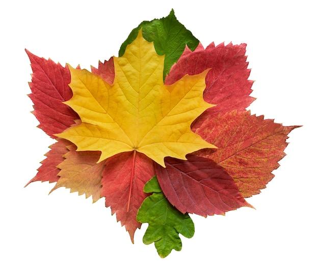 Kolekcja jesiennych liści dębu, klonu, osiki na białym tle na białej powierzchni