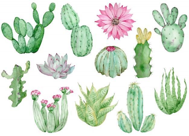 Kolekcja kaktusów akwarela na białym tle