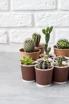 Kolekcja kaktusów i sukulentów w małych papierowych kubeczkach. dom i ogród. skopiuj miejsce