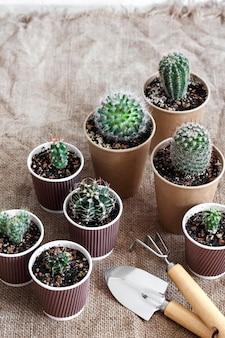 Kolekcja kaktusów i sukulentów w małych papierowych kubeczkach.