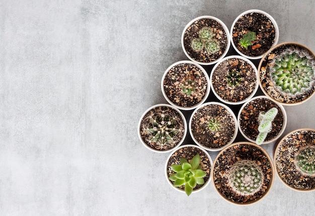 Kolekcja kaktusów i sukulentów w małych papierowych kubkach na betonowym tle. dom i ogród. widok płaski, widok z góry. skopiuj miejsce