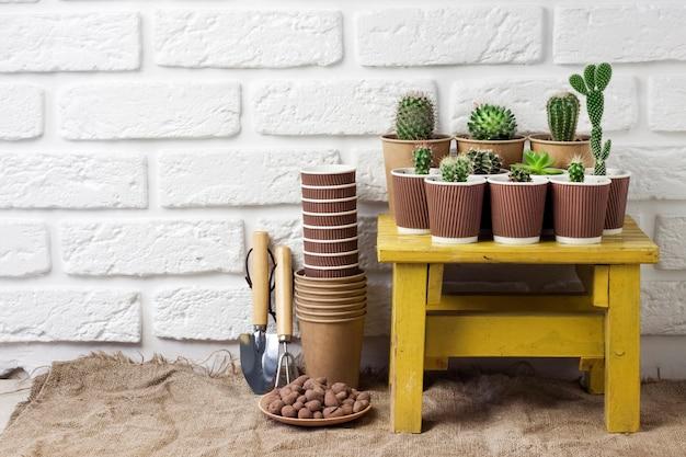 Kolekcja kaktusów i sukulentów w papierowych kubkach na małym żółtym stole