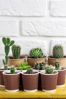 Kolekcja kaktusów i sukulentów w papierowych kubkach na małym żółtym stoliku