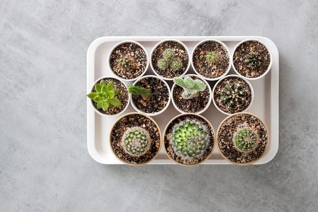 Kolekcja kaktusów i sukulentów w papierowych kubkach na tacy