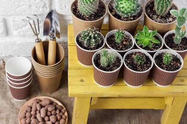 Kolekcja kaktusów i sukulentów w papierowych kubkach