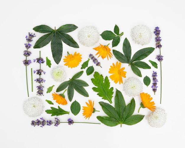 Kolekcja Kwadratowych Kwiatów Darmowe Zdjęcia