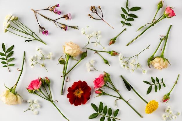 Kolekcja kwiatów widok z góry