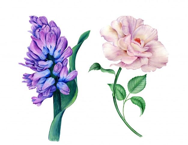 Kolekcja kwiatowy vintage akwarela ilustracja botaniczna
