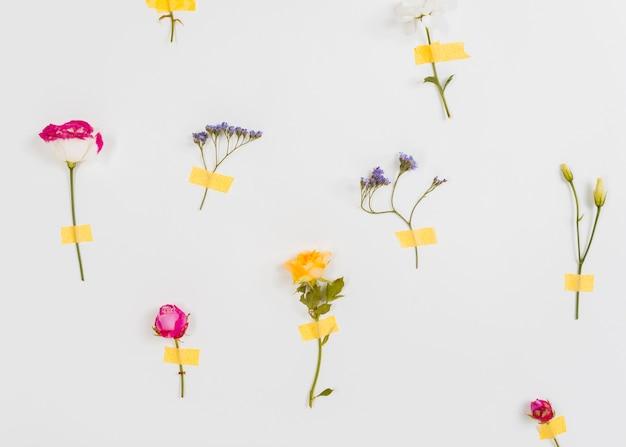 Kolekcja kwitnących wiosennych kwiatów