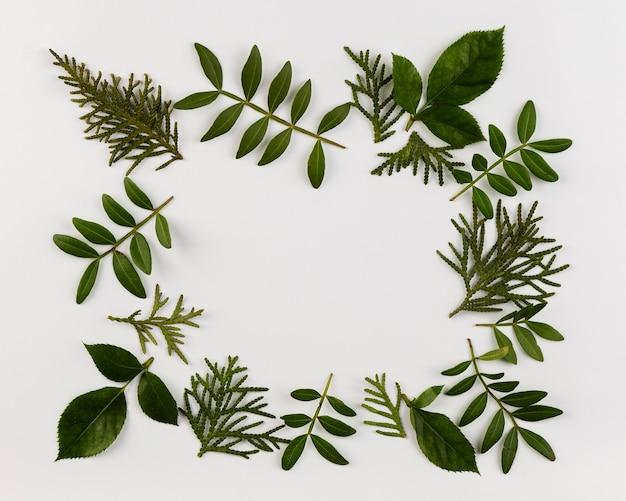 Kolekcja liści widok z góry