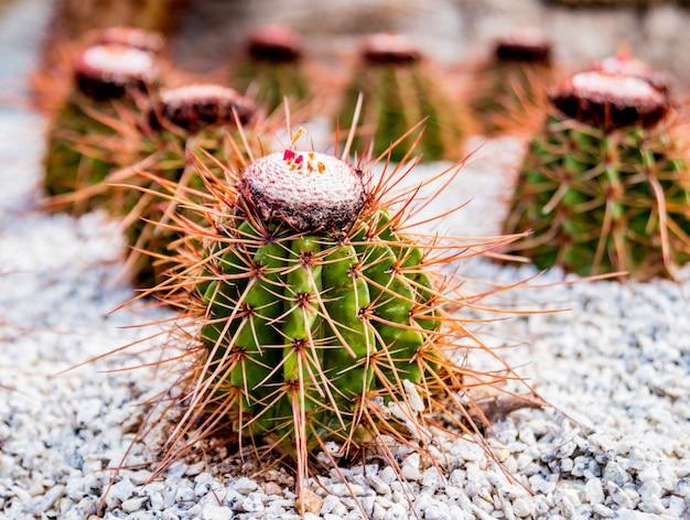 Kolekcja pięknych kłujących kaktusów w szklarni