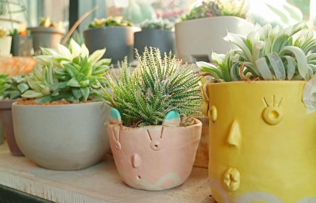 Kolekcja roślin doniczkowych wyświetlanych przy oknie