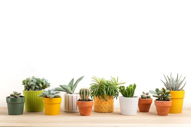 Kolekcja Różnych Sukulentów I Roślin W Kolorowych Doniczkach. Doniczkowy Kaktus I Rośliny Domowe Na Jasnej ścianie. Stylowy Wewnętrzny Ogródek Przydomowy Premium Zdjęcia