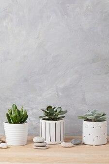 Kolekcja różnych sukulentów i roślin w kolorowych doniczkach. doniczkowy kaktus i rośliny domowe na jasnej ścianie. stylowy wewnętrzny ogródek przydomowy