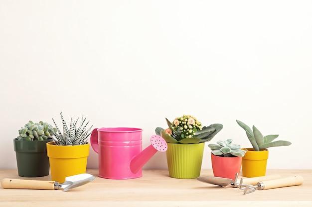 Kolekcja różnych sukulentów i roślin w kolorowych doniczkach i narzędziach ogrodniczych. doniczkowe rośliny domowe na jasnej ścianie. stylowy wewnętrzny ogród. koncepcja ogrodnictwa w domu