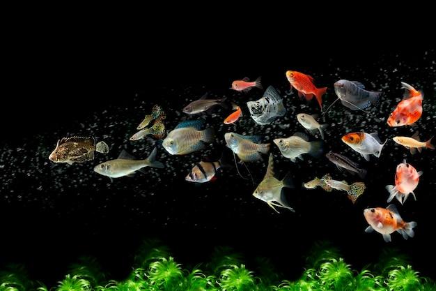 Kolekcja słodkowodnych tropikalnych ryb akwariowych z bąbelkami wodnymi i roślinami wodnymi