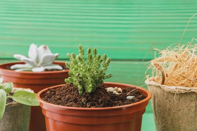 Kolekcja soczyste rośliny domowe na drewnianym stole