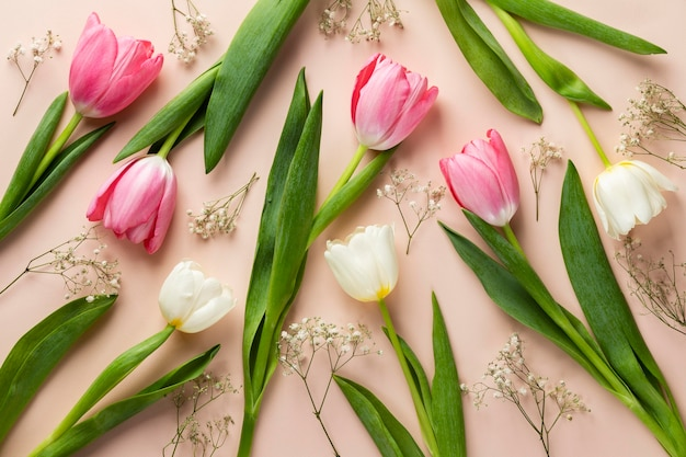 Kolekcja tulipanów widok z góry