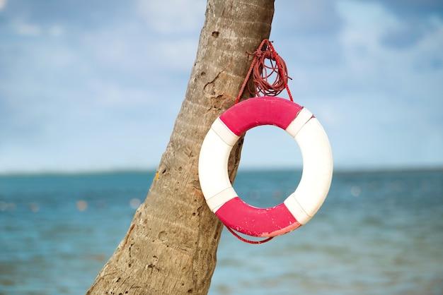 Koło ratunkowe wiszące na palmie na tle morza.