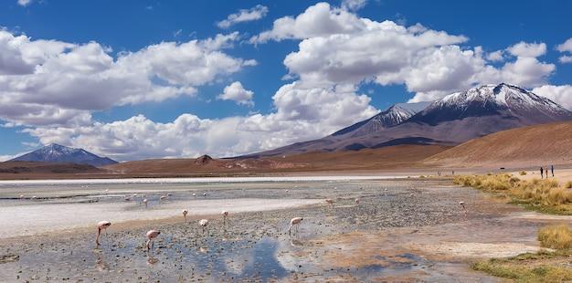 Kolonia andyjskich flamingów i wulkanów w laguna hedionda w boliwii. ameryka południowa