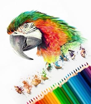 Kolor głowy papugi ara na białym tle. kolorowe kredki akwarelowe, materiały fotograficzne. szkic w toku