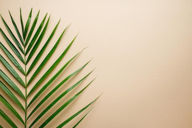Kolor tropikalnych liści palmowych. lato
