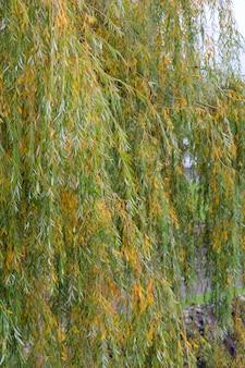 Kolor żółty i zieleń opuszczamy drzewa w naturze dla tekstury