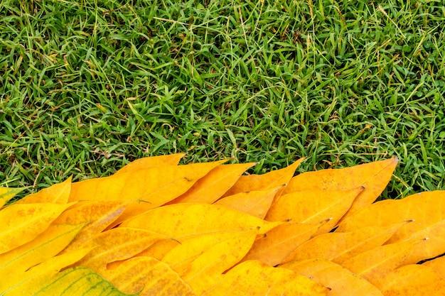 Kolor żółty opuszcza na zielonej trawy tła roczniku