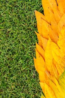 Kolor żółty opuszcza na zielonej trawy wzorze i tle