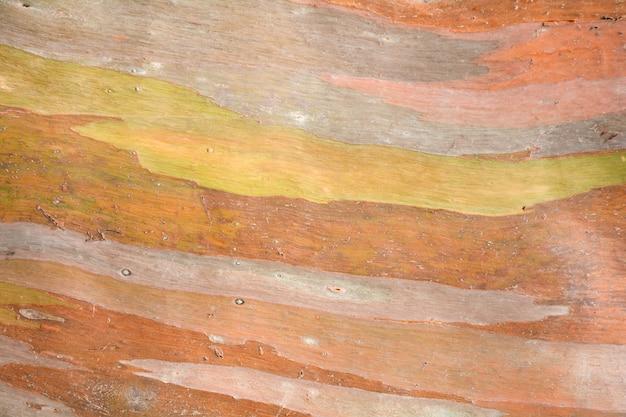 Kolorowa abstrakta wzoru tekstura eukaliptusowa kora drzewa