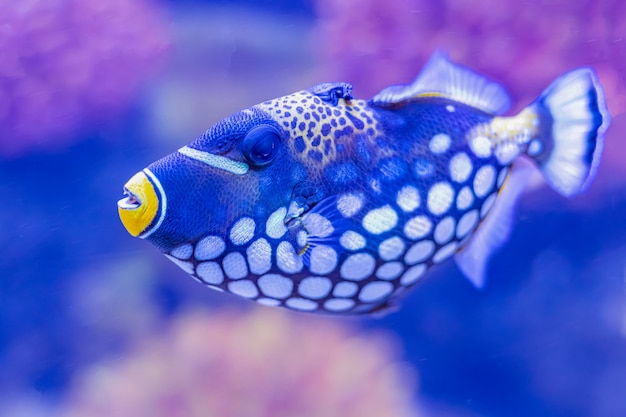 Kolorowa denna ryba w akwarium